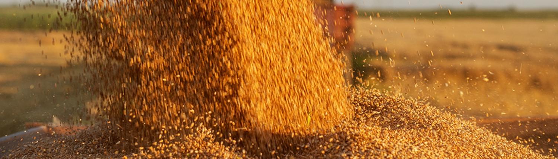 Grain Falling